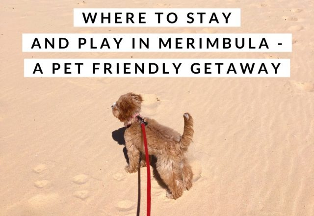 Where to Stay and Play in Merimbula  – A Pet Friendly Getaway