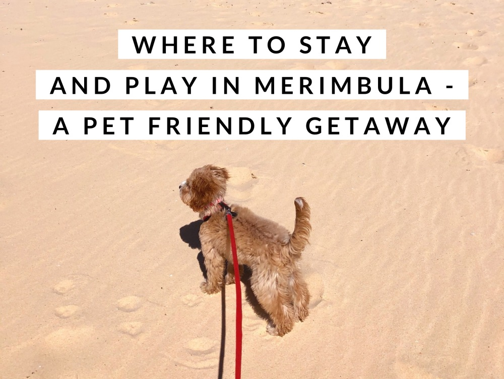 Pet friendly where to stay and play Merimbula