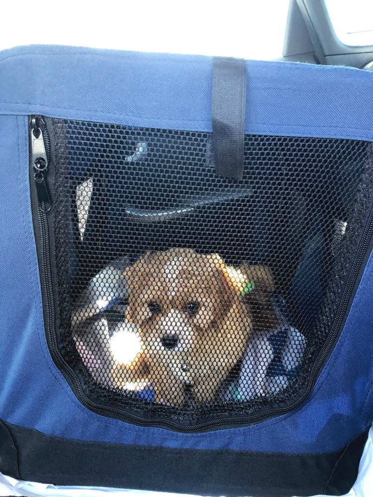 puppy essentials travel crate