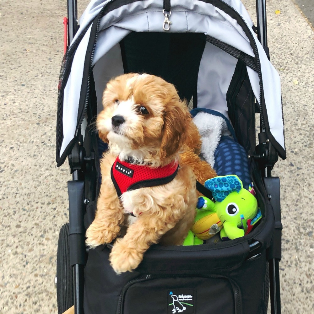 puppy essentials dog pram