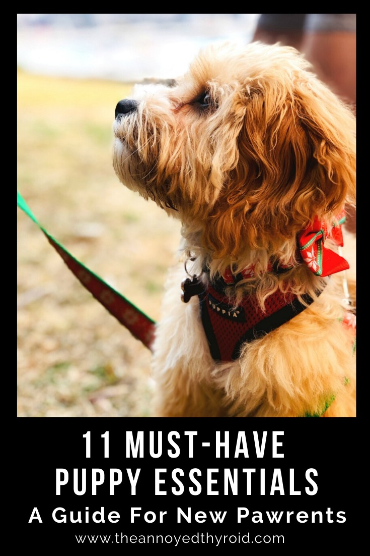 11 puppy essentials new pawrents