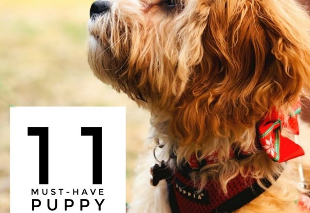 11 Must Have Puppy Essentials – A Guide For New Pawrents