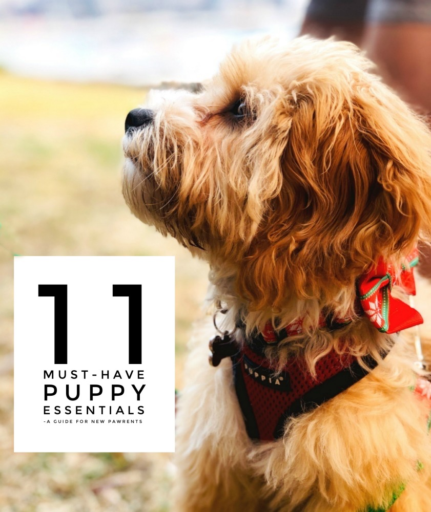 11 pupppy essentials