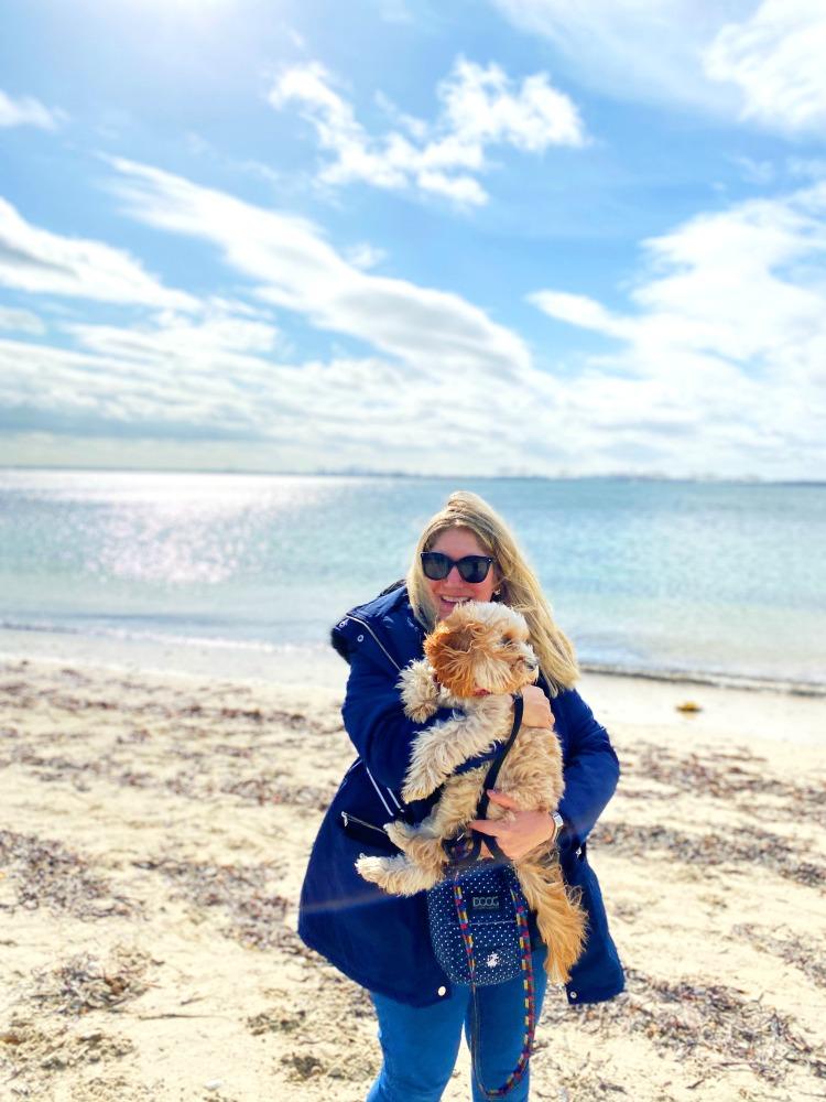 cavoodle at kurnell dog beach