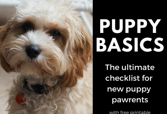 Puppy Basics – The Checklist
