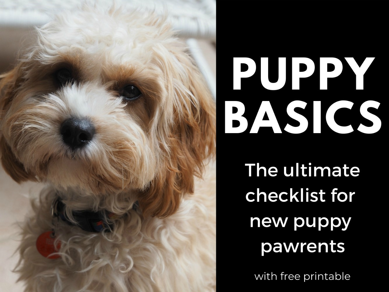 puppy basics with printable checklist