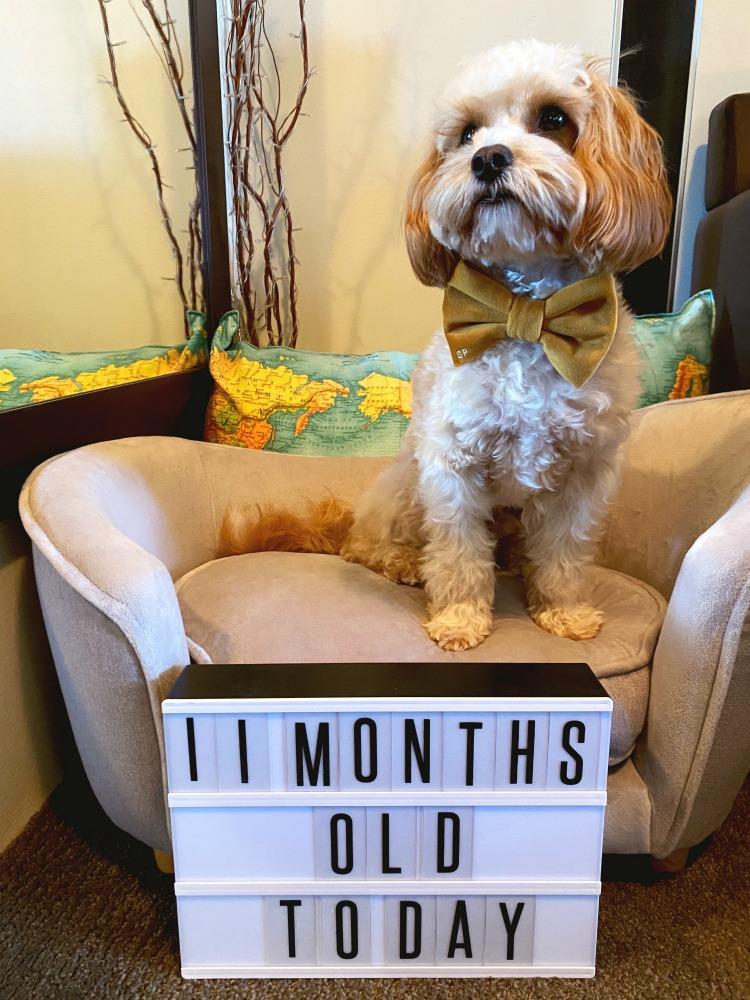 Teddy Roosevelt 11 months old