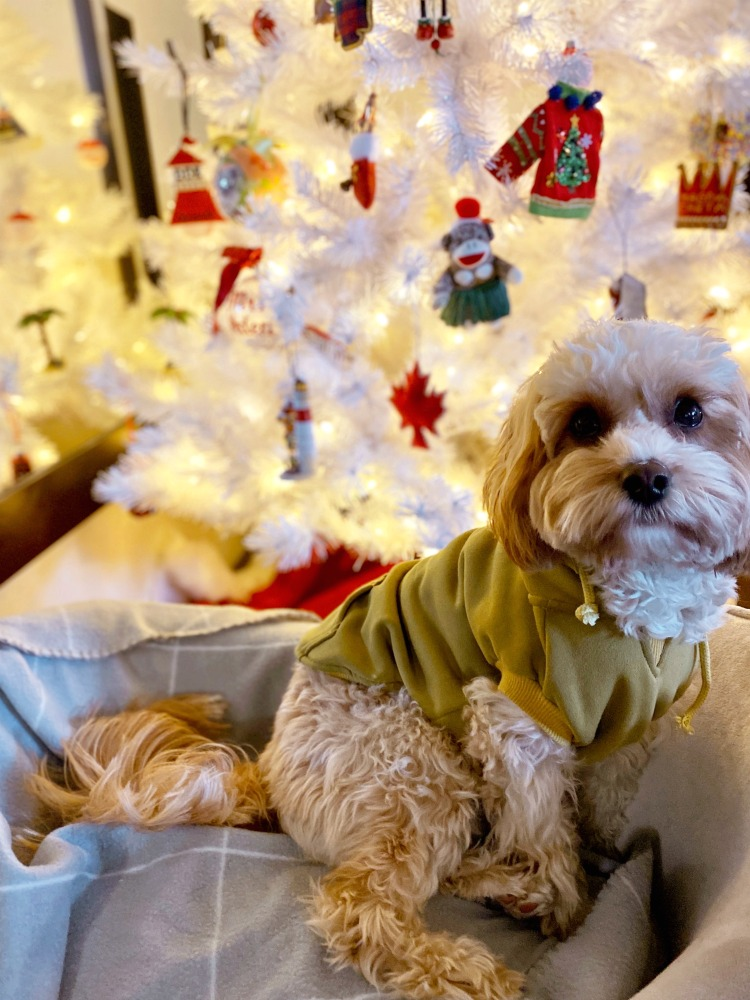 Teddy sitting by Christmas tree in July