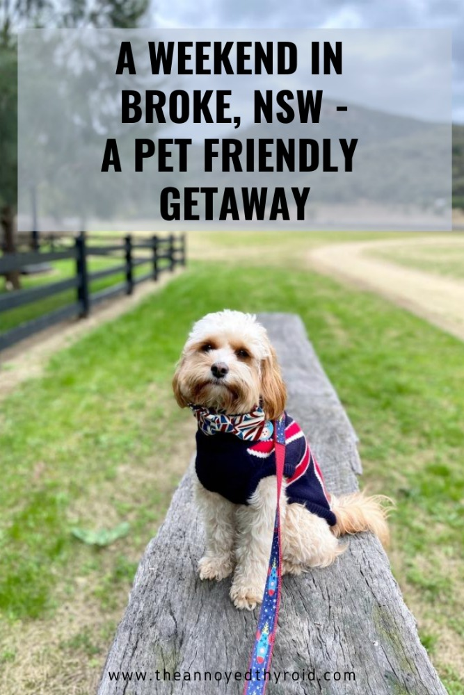 pet friendly getaway broke
