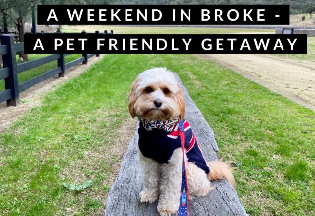 A Weekend in Broke, Hunter Valley – A Pet Friendly Getaway