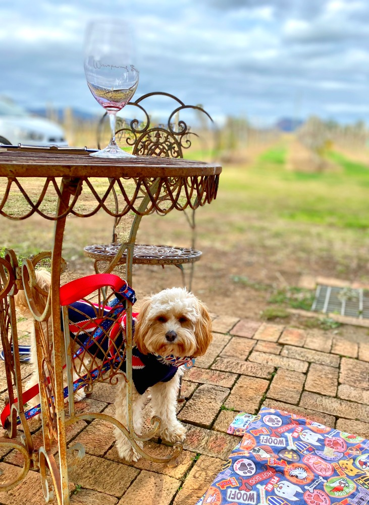 dog under table with vineyard in background
