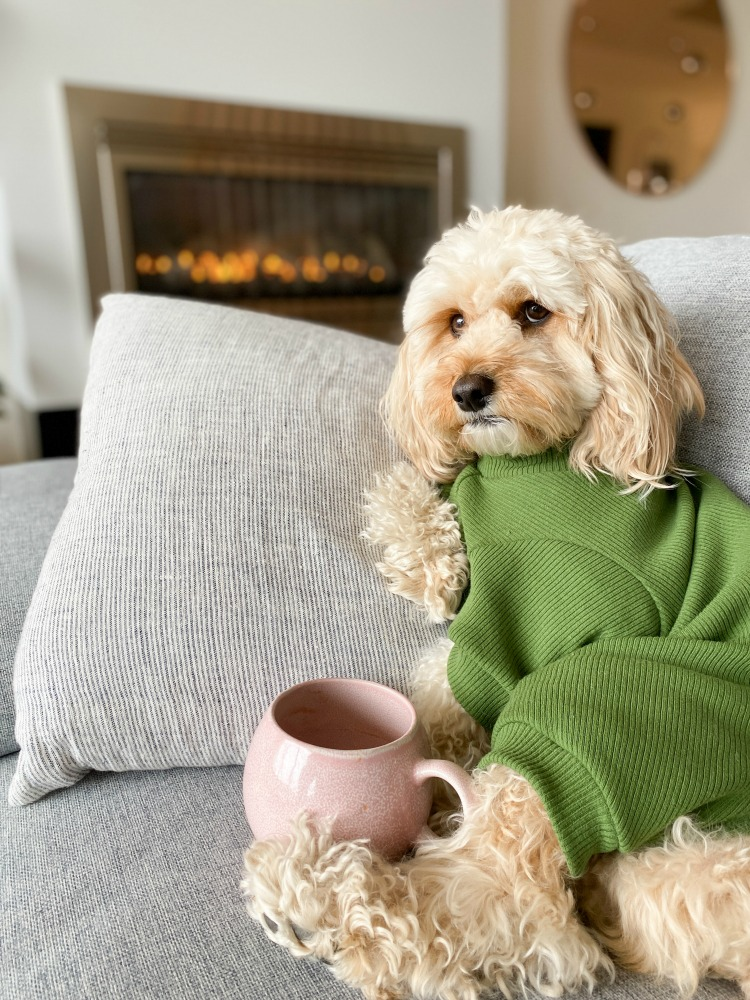a cavoodle wearing a onesie with a mug of tea