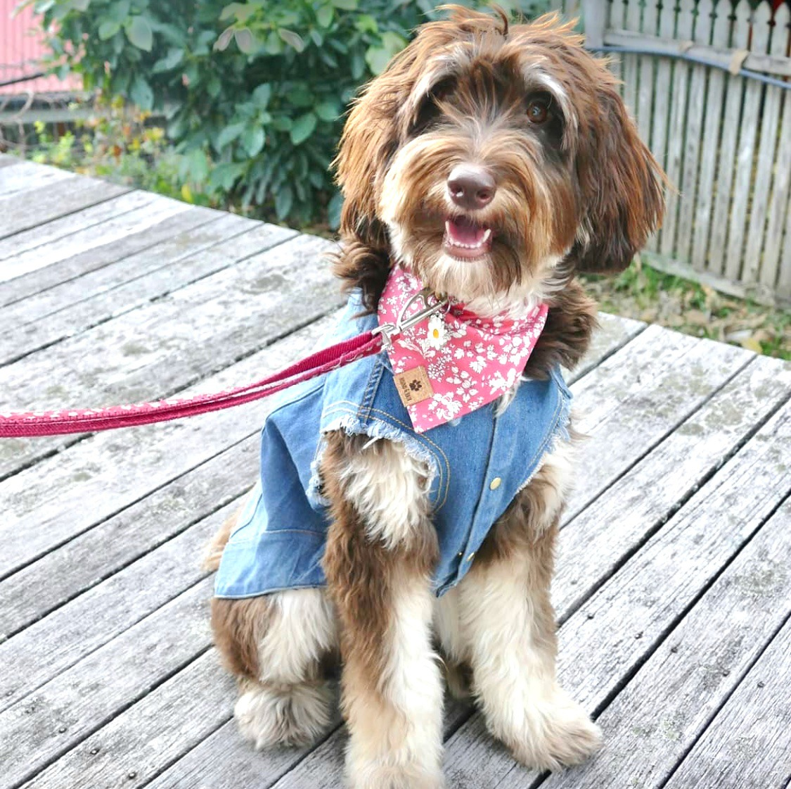 dog wearing denim jacket and bandana