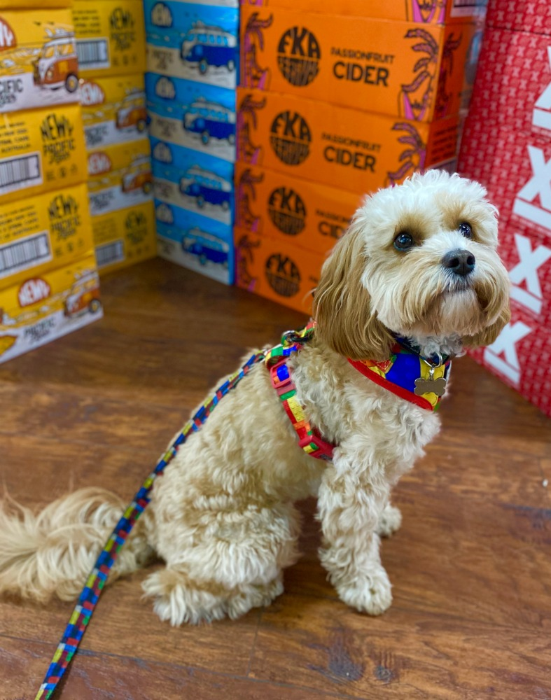 dog sitting by cases of beer