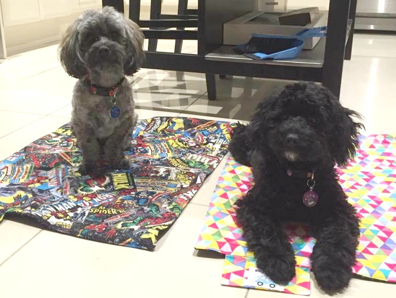 2 dogs sitting on cafe mats