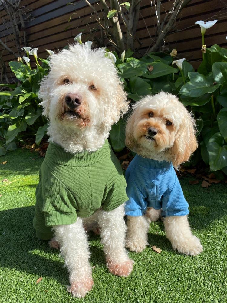two oodles wearing onesies