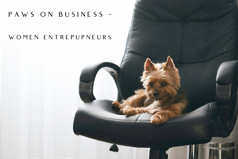 small dog sitting on office chair