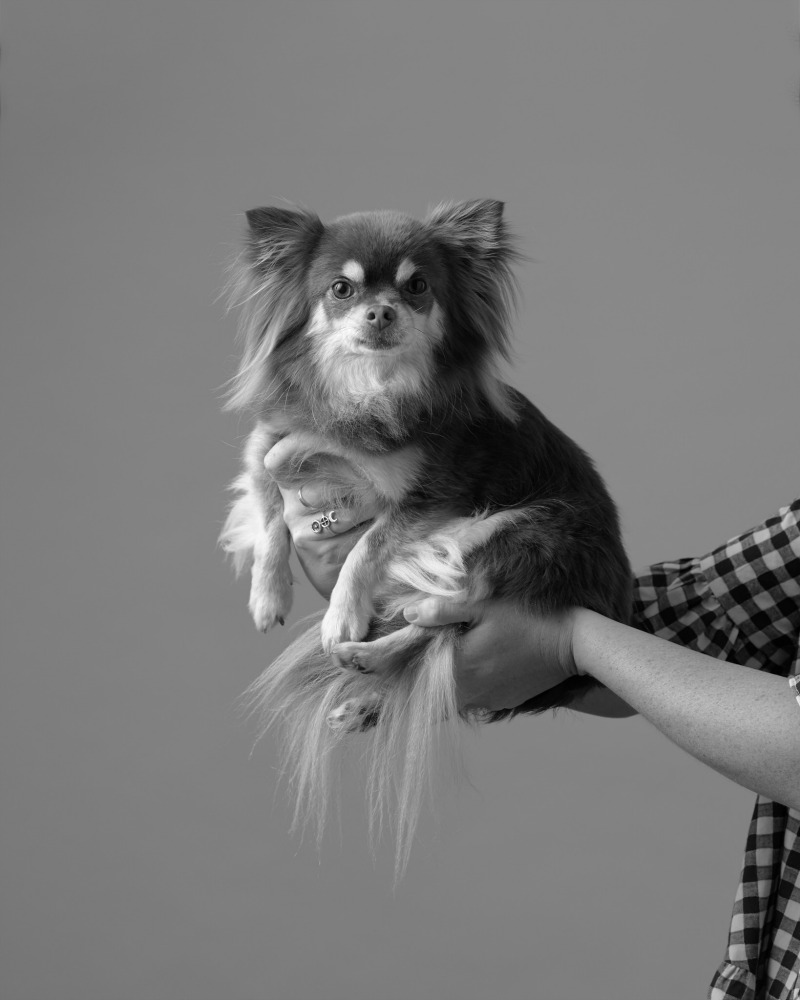 black and white image of small dog being held