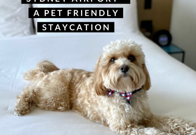 Citadines Connect Sydney Airport – A Pet Friendly Staycation