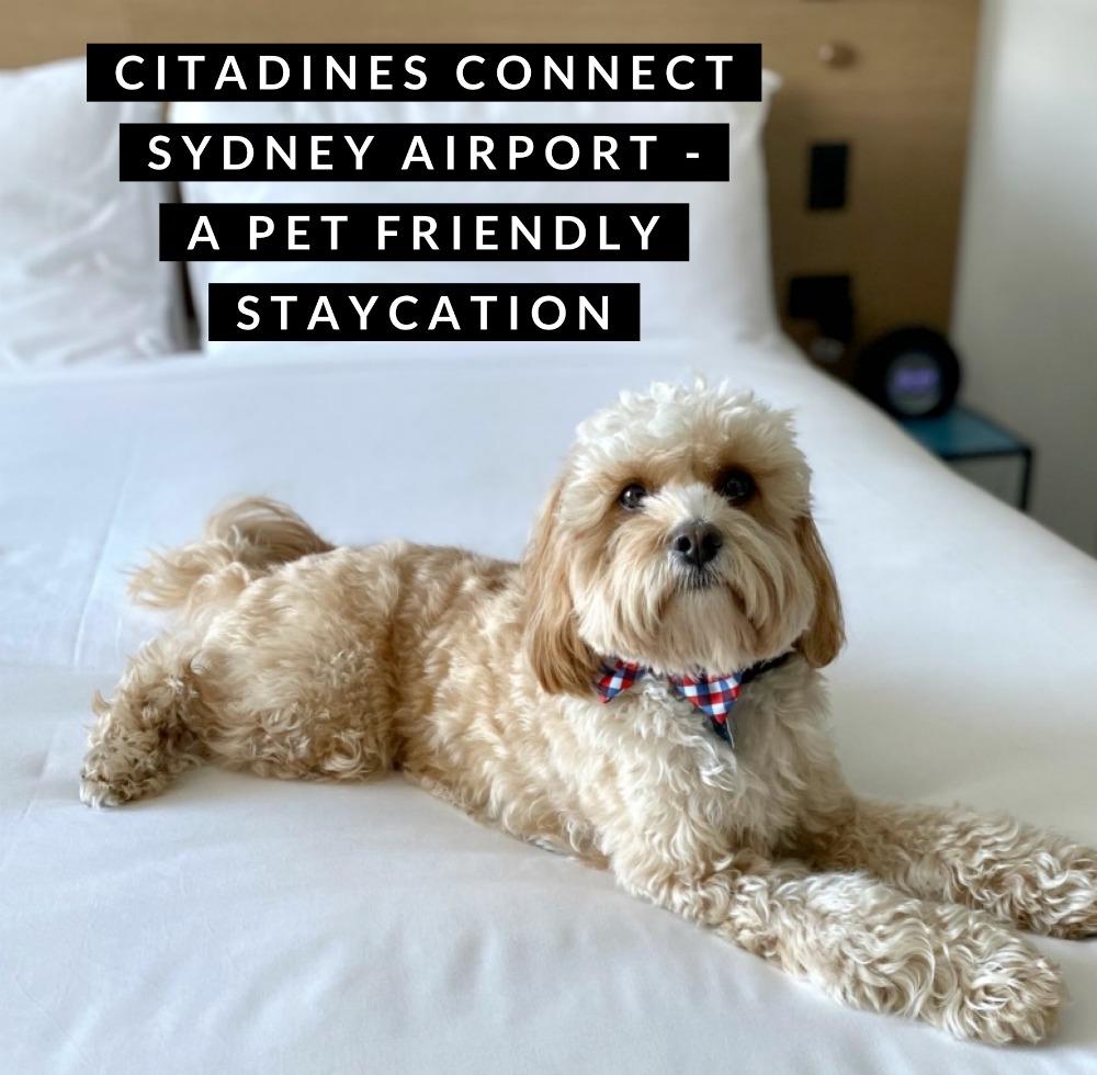 dog lying on king size hotel bed