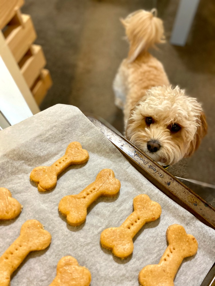 dog sniffing tray of peanut butter dog biscuits