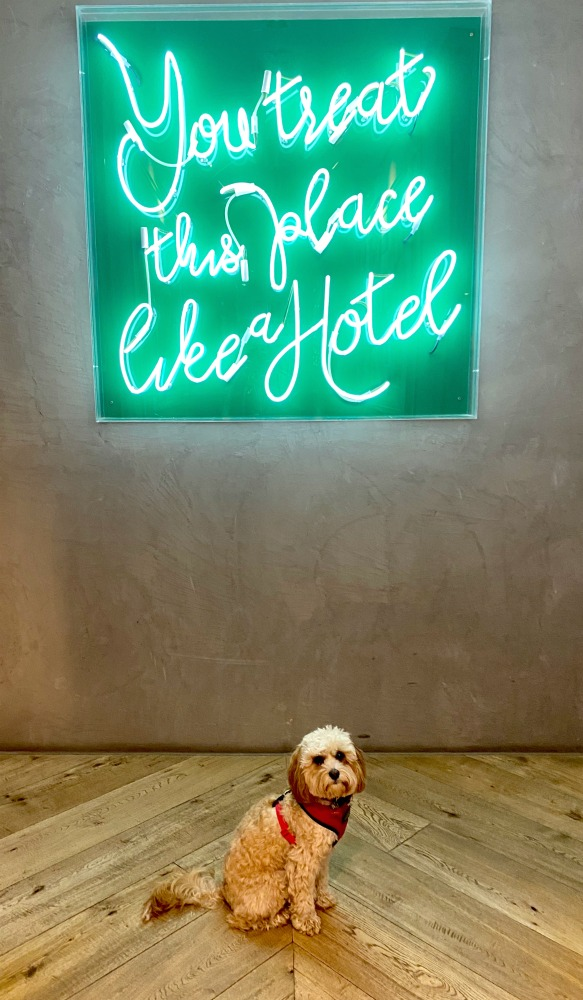 puppy sitting under neon sign