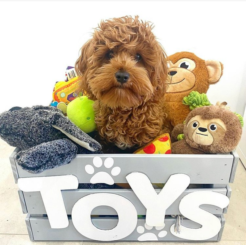 toy cavoodle sitting in toy box surrounded by toys