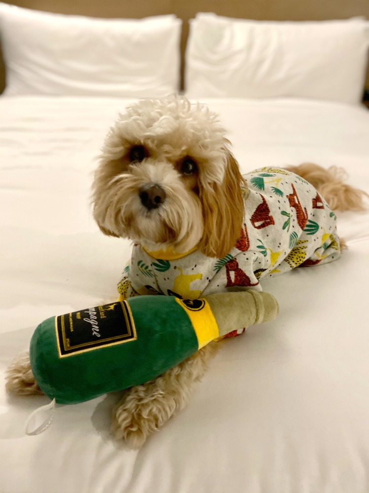 dog wearing pyjamas lying on king size bed with toy bottle of champagne