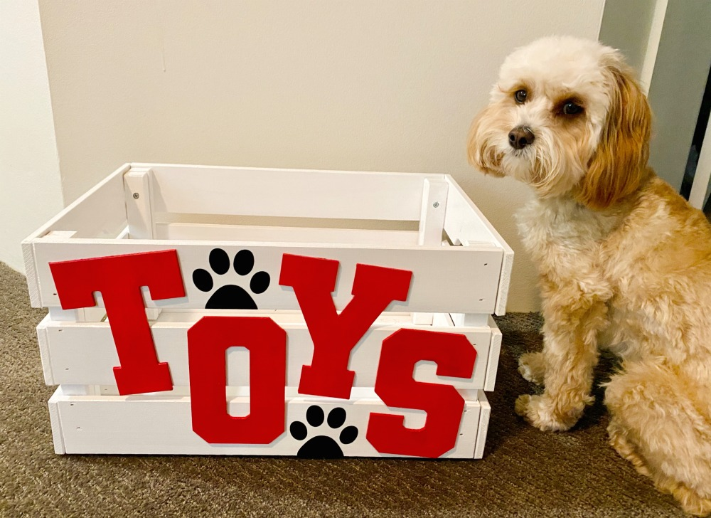 cavoodle sitting next to an empty toy box