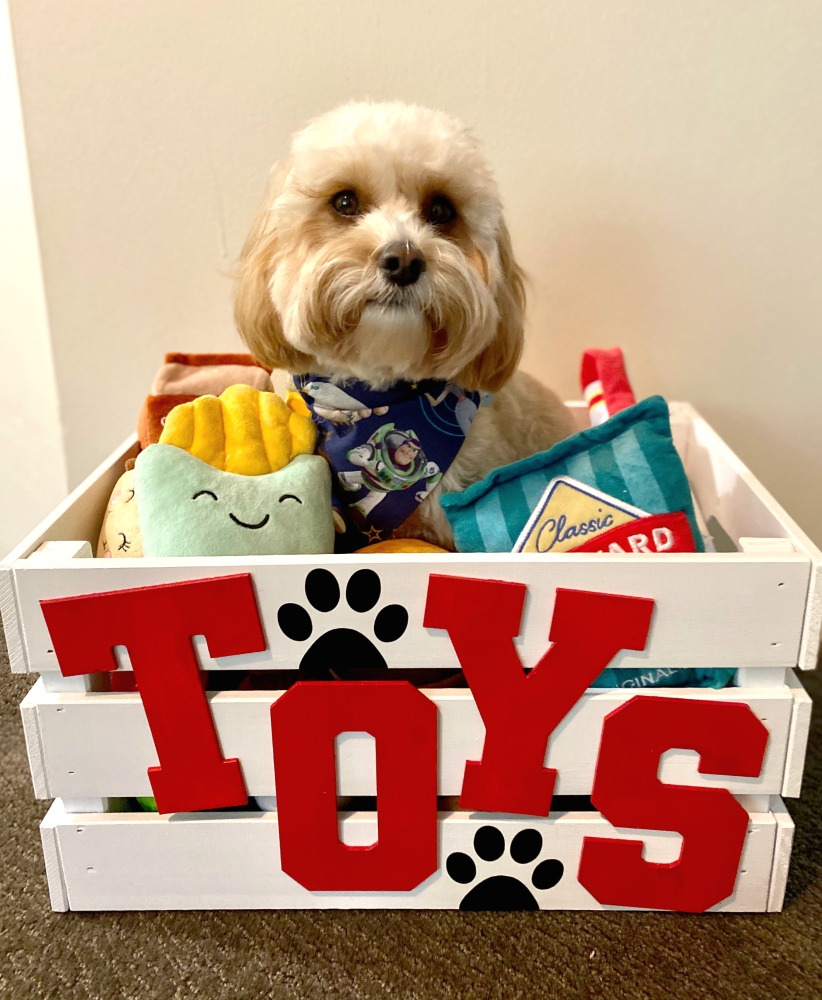 dog sitting in toy box with plush toys
