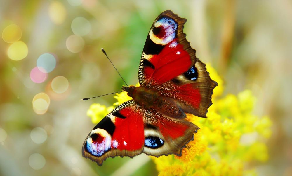 butterfly on bokeh background