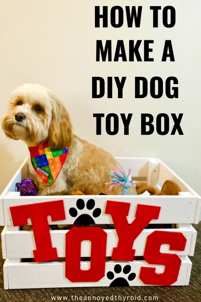 cavoodle sitting in dog toy box