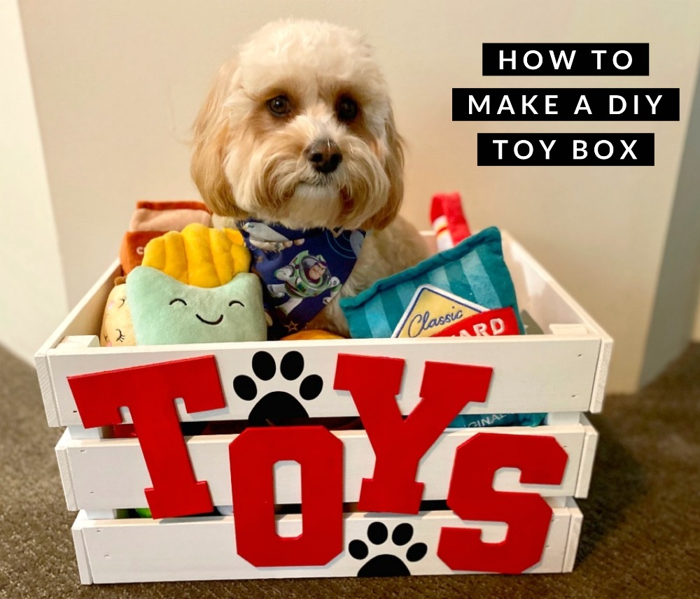 cavoodle sitting in toy box with plush toys