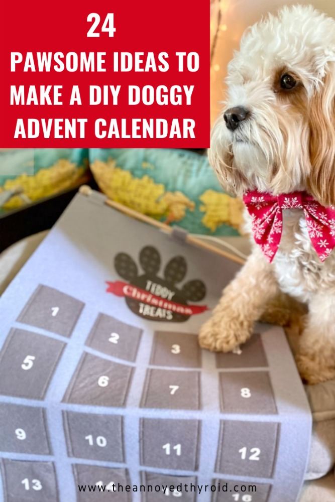 dog looking at advent calendar