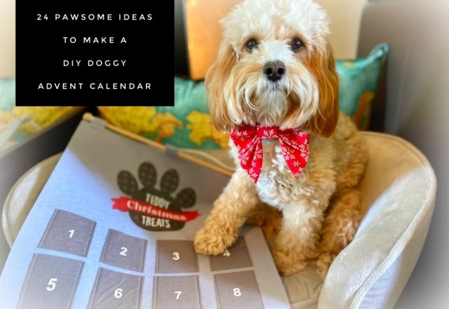 24 Pawsome Ideas to Make a DIY Doggy Advent Calendar