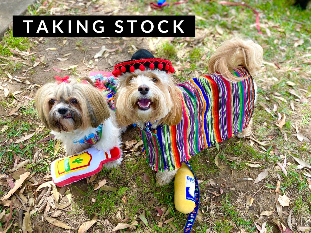 2 dogs wearing mexican outfits