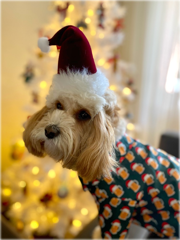 dog dressed in beer shirt and santa hat