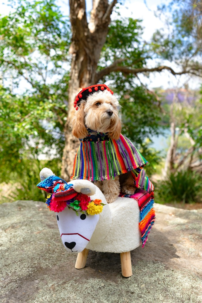 dog in mexican costume sitting on a toy llama