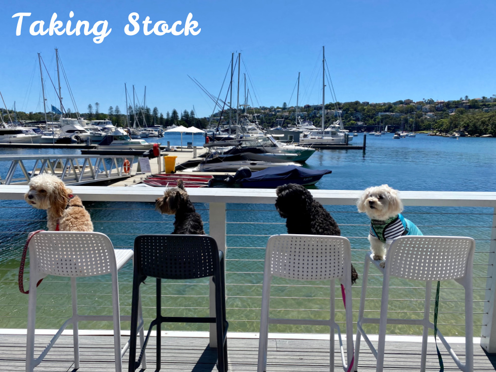 four dogs sitting on bar stools looking at bay