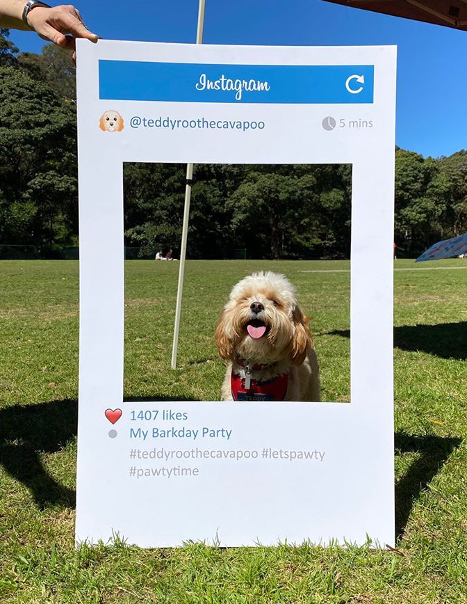 dog sitting in instagram frame