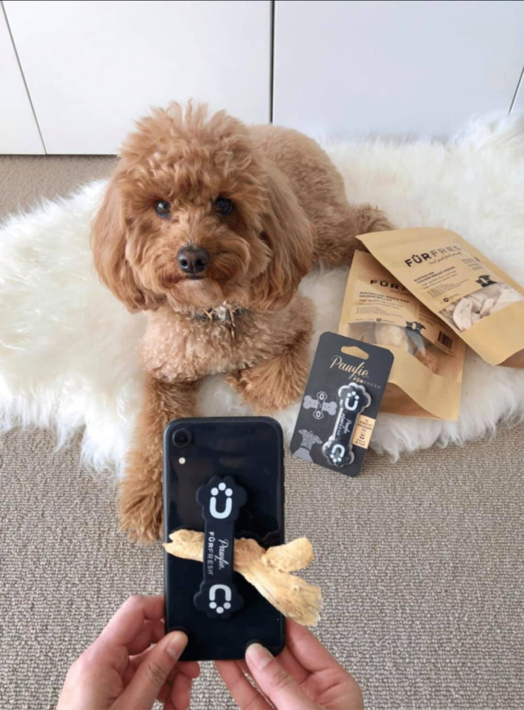 iphone taking picture of cavoodle with furfresh treats