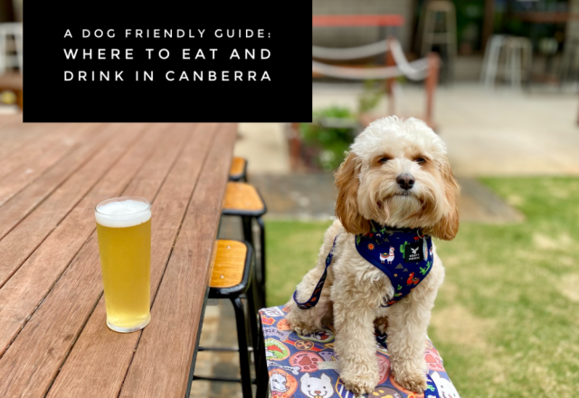 A Dog Friendly Guide: Where to Eat and Drink in Canberra