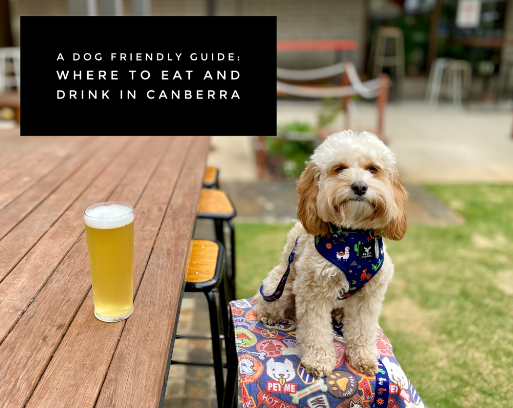 dog sitting at a high table next to a pint of beer