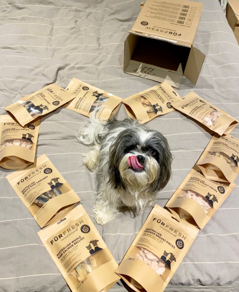 shitzu sitting in the middle of furfresh packets arranged in a heart shape