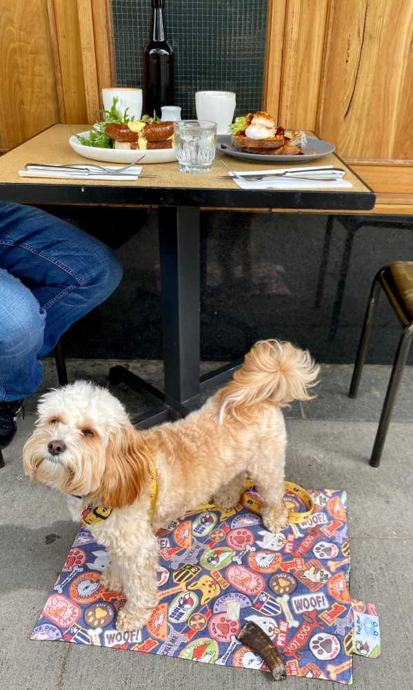 dog sitting under breakfast table at cupping room canberra