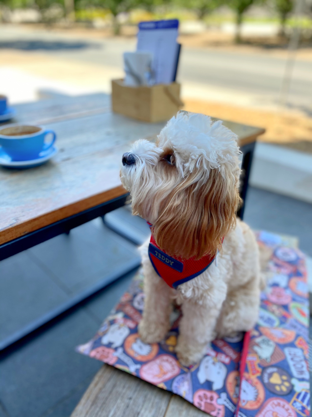 dog sitting on bench looking at coffee