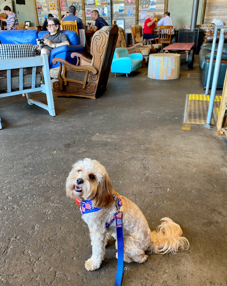dog sitting in warehouse style cafe