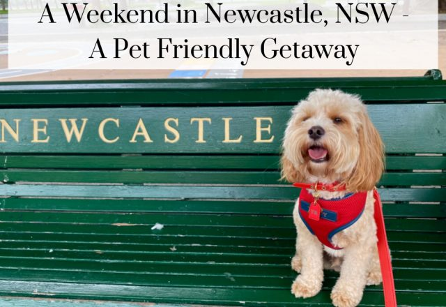 A Weekend in Newcastle, NSW – A Dog Friendly Guide
