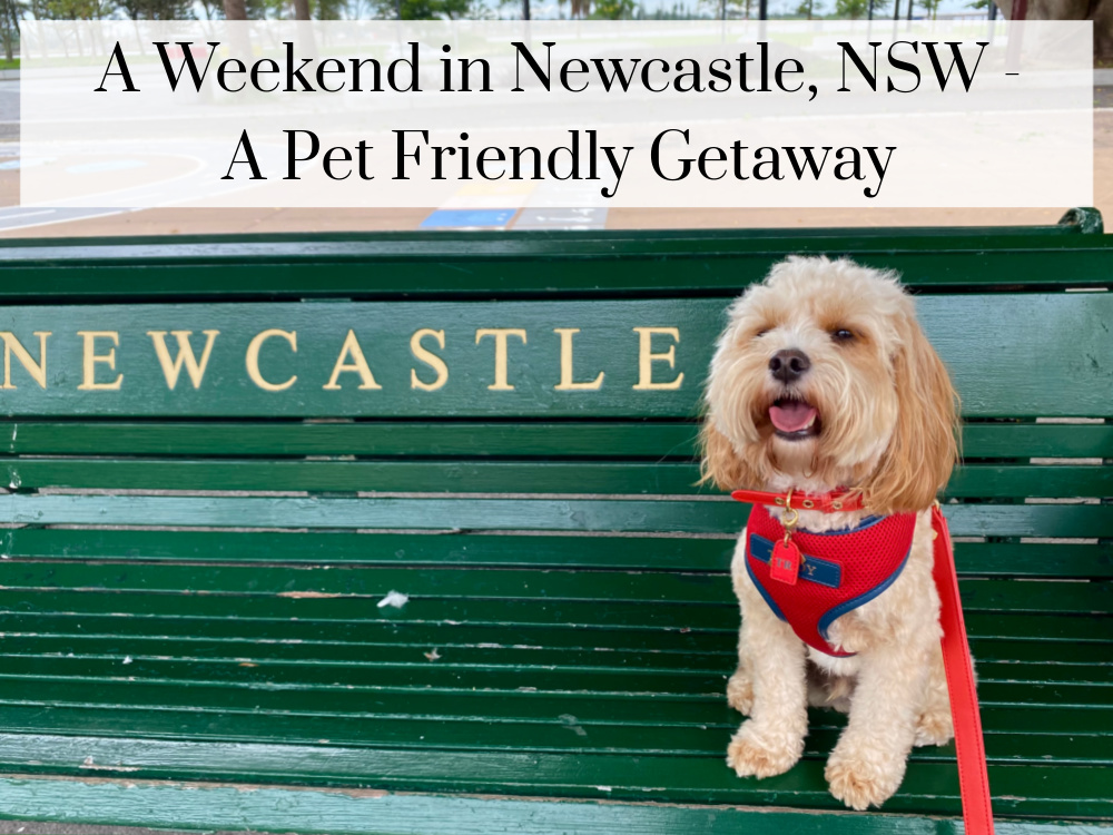 dog sitting on a green railway bench that says newcastle