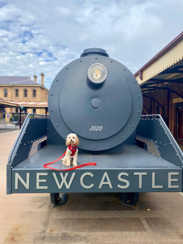 dog sitting on old locomotive